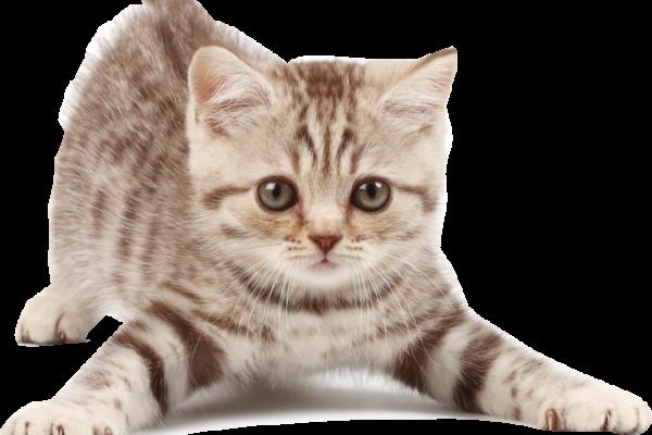 chat pendaison de crémaillère 1