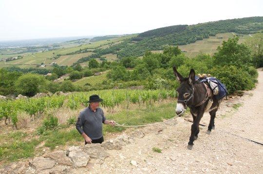 Hervé Josserand et son âne