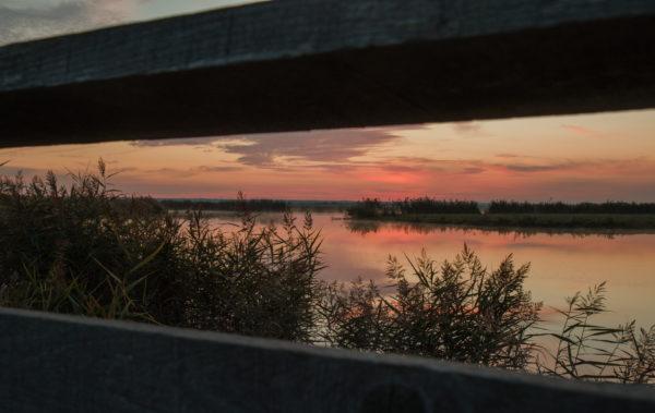 Lavau sur Loire au petit matin