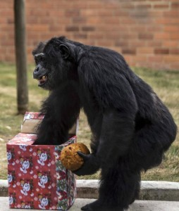 Noêl. Cadeau singe. Zoo de Bresilia.