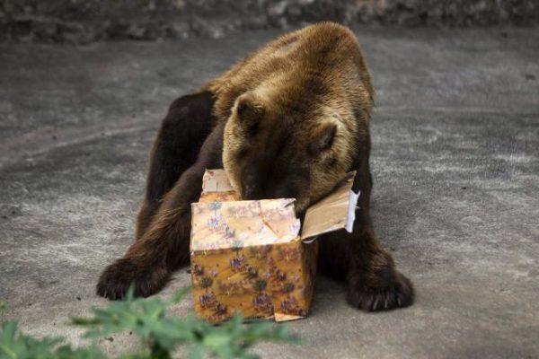 Noêl.Cadeau dans les zoos. Brezilia