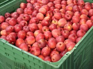 reddlove. Pomme rouge. cageot.
