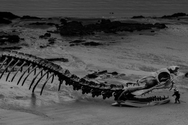 Serpent de Mer à St Brévin_
