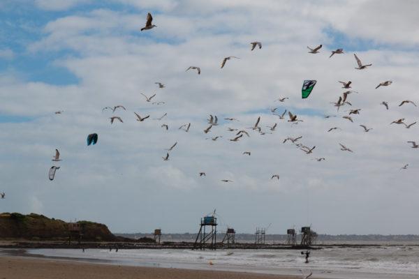 """Petit devoir d'été : Chercher les erreurs dans la photo. Un indice, il n'y en a que 3 et pas 7.  Les surfeurs, les kites surfeurs, les baigneurs en famille, les véliplanchistes et les bateaux, on connaissait déjà la coexistence parfois difficile de tout ces mondes. Si demain il faut ajouter à la liste les  mouettes, ou va t'on  ? A quand le panneau """"partageons le ciel"""".  Bon je vous rassure, dans la vrai vie, c'est évidement un effet d'optique, ils n'étaient pas dans le même plan, pas fou les mouettes."""