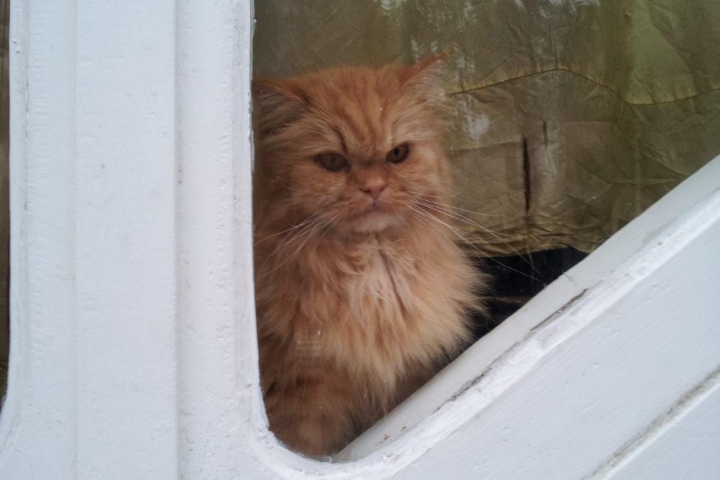 chat gardien. 29 avenue Rapp à Paris