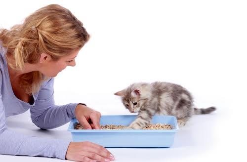 Cat's best. Litière chat et maitresse.
