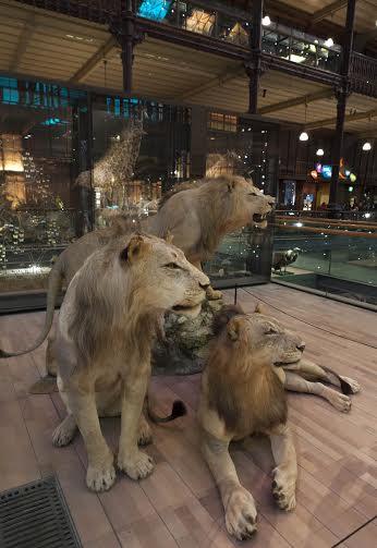 De nouveaux fauves au Museum d'histoire naturelle