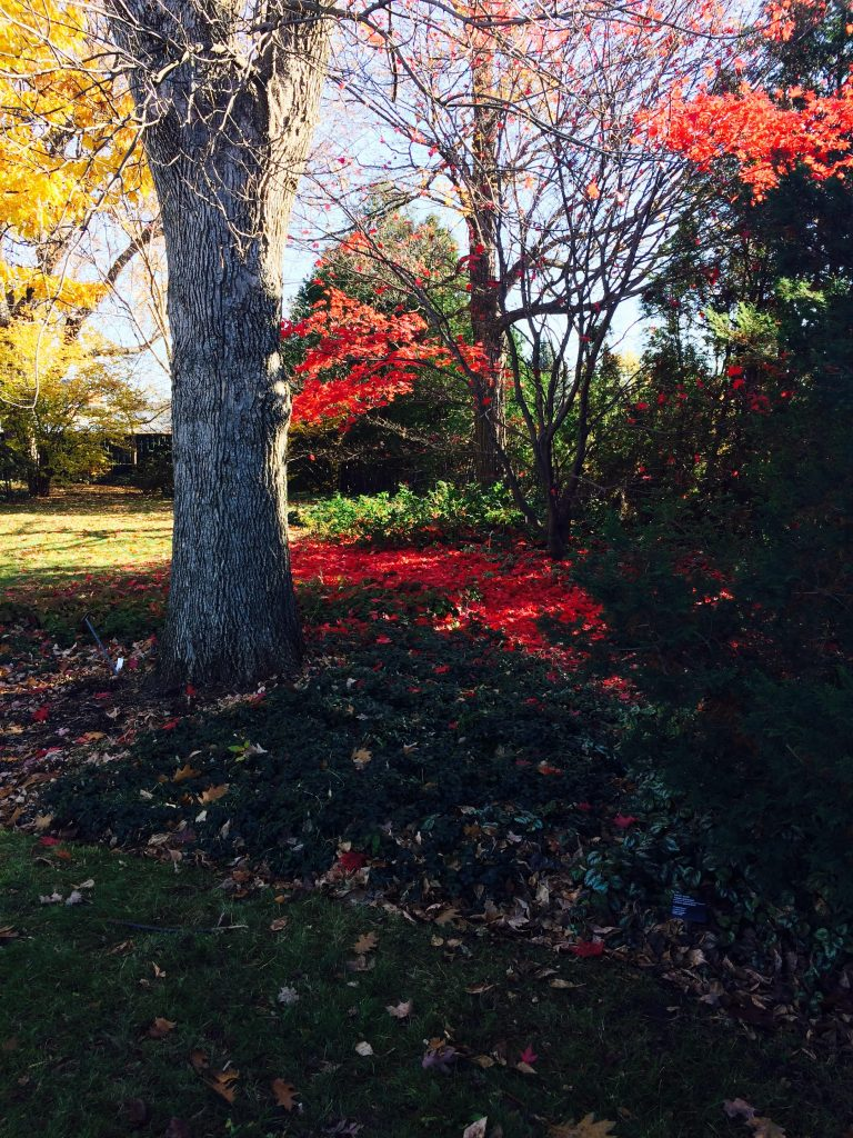 montreal-automne-2