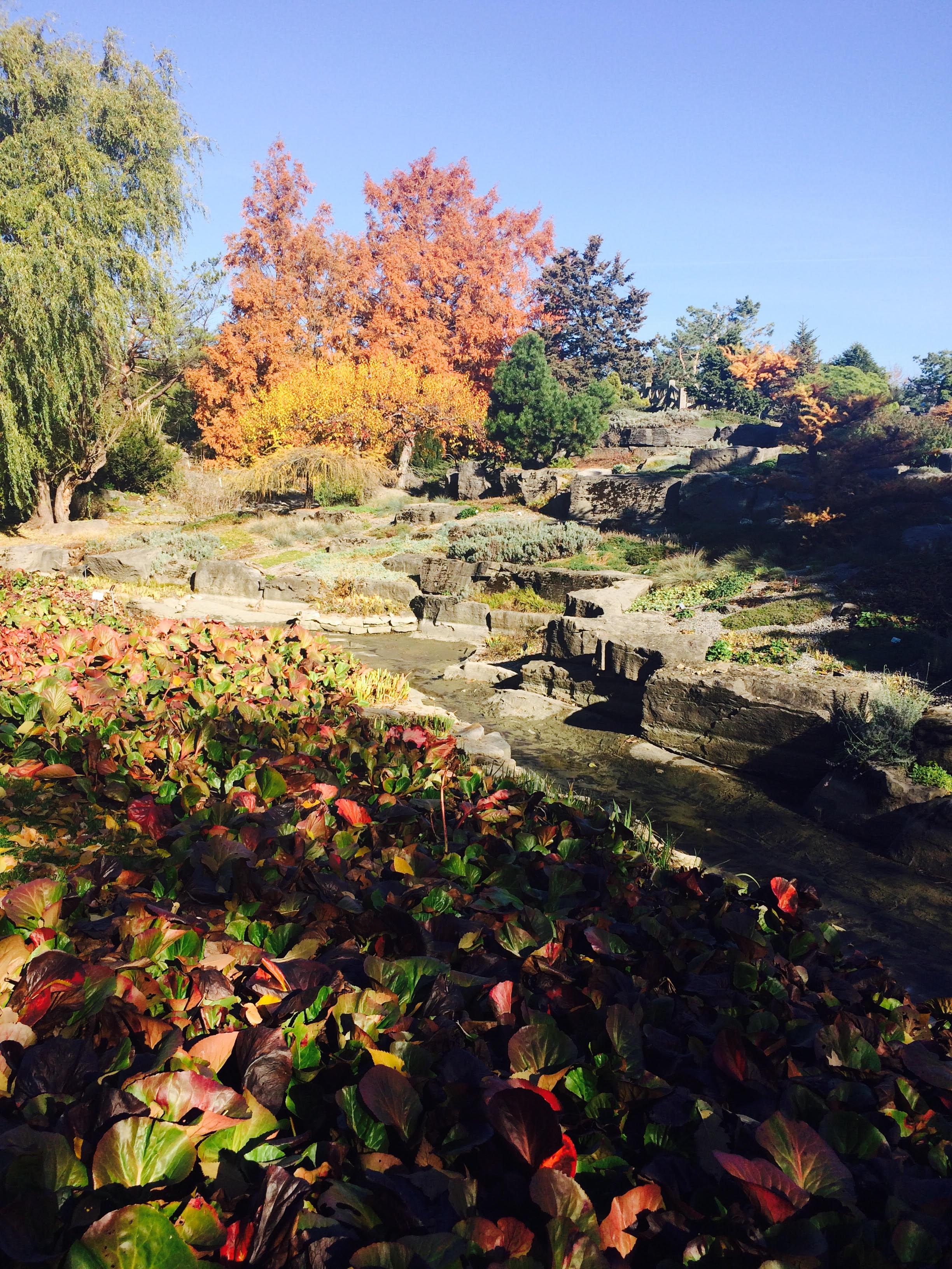 Montr al l automne au jardin botanique la femme qui marche for Jardin botanique hiver 2016