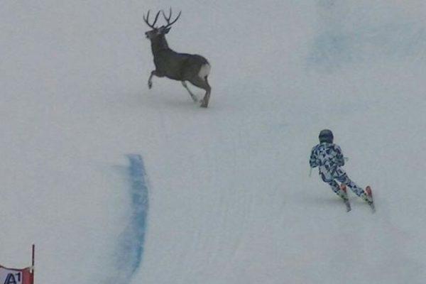 skieuse-avec-un-cerf