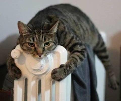 chat sur radiateur.