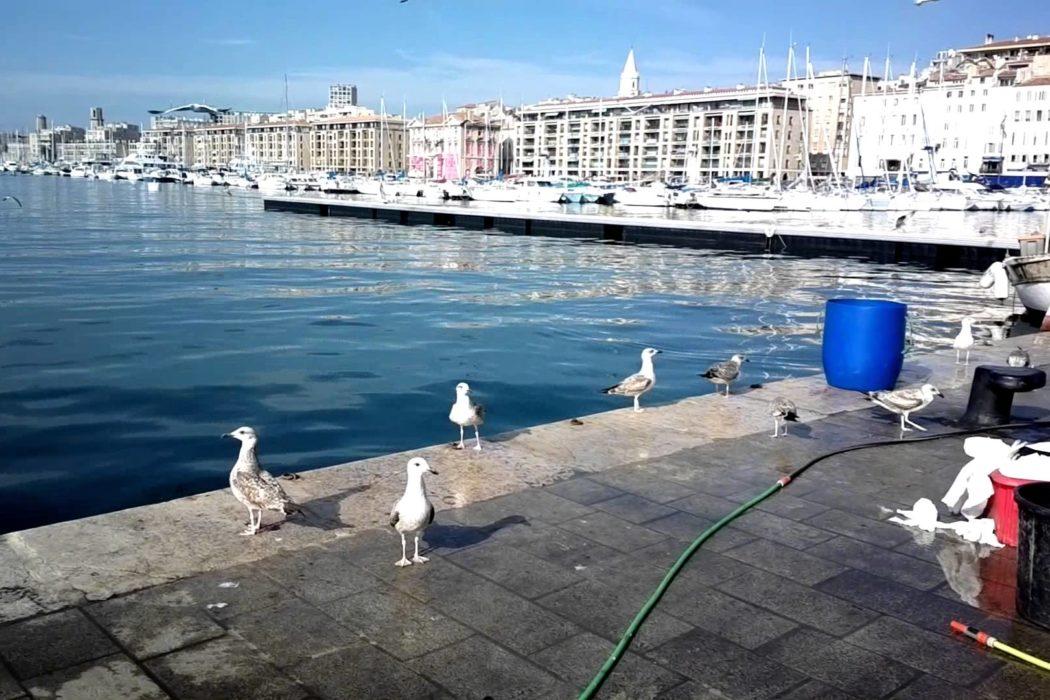 goélands au marché aux poissons sur le vieux port à marseille.