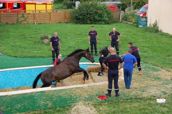 cheval sorti de la piscine.