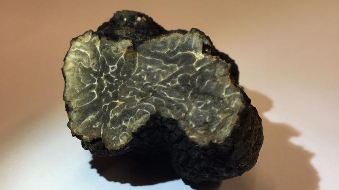 Une truffe sauvage découverte dans Paris