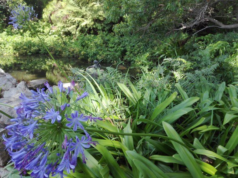 Le Cap. Kirstenbosch garden. La Femme Qui Marche