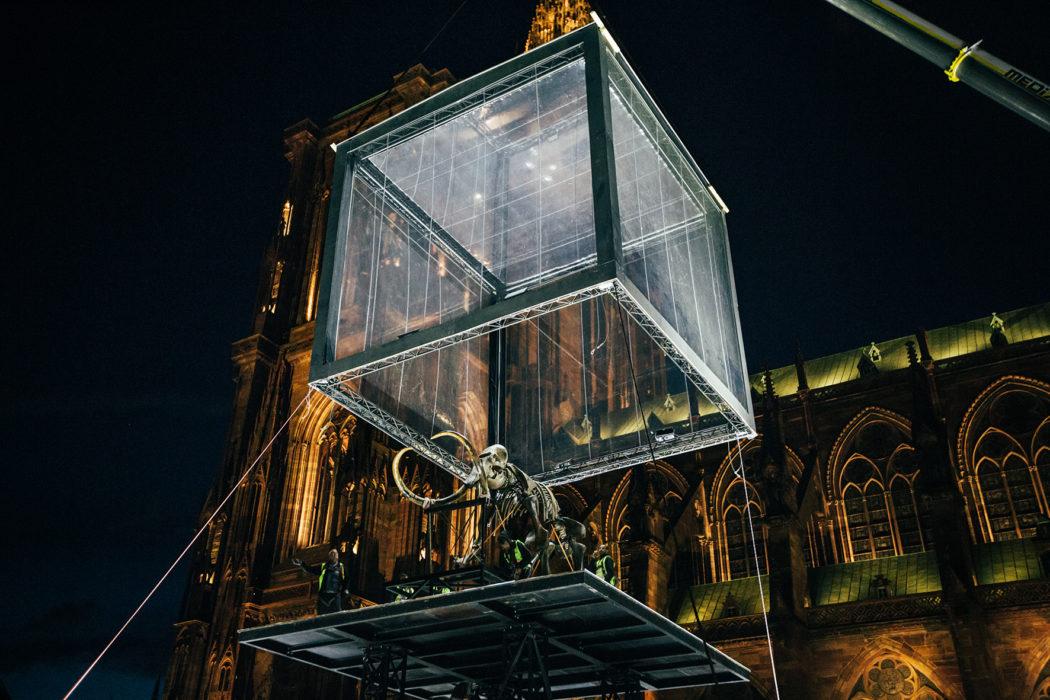 """Strasbourg. """"Mammuthus Volantes""""©VincentMullerPhotographies. La femme Qui Marche"""