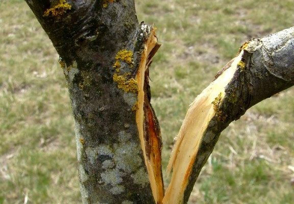 une branche casse