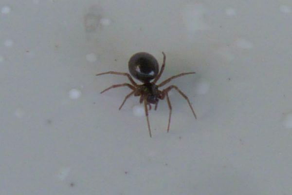 pourquoi les araignées volent tombent et voyagent.