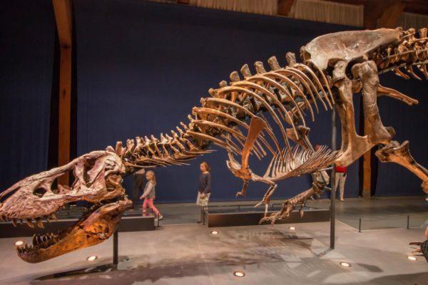 un t.rex à paris. trix. museum du jardin des plantes.