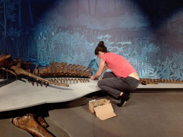T-Rex. Muséum. collage. La Femme Qui Marche;