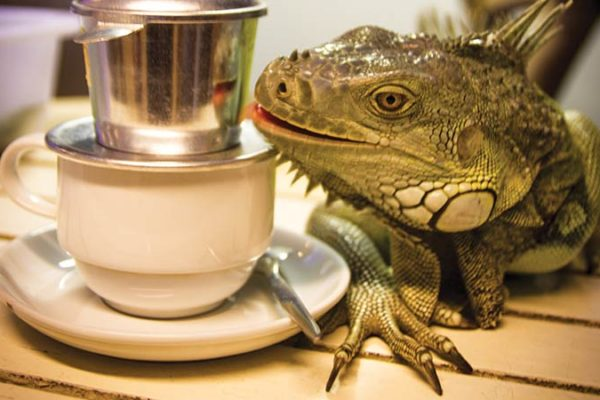 SAIGON'S-FIRST-REPTILE-CAFE-f