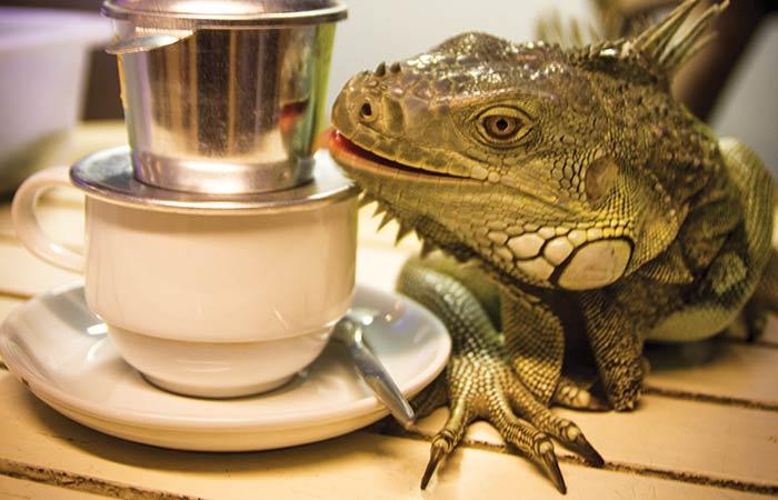 SAIGON'S-FIRST-REPTILE-CAFE-f