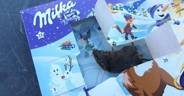 une souris morte dans un calendrier de l'avent milka.