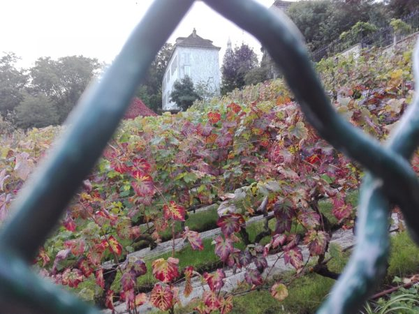 Montmartre et ses vignes. La Femme Qui Marche.