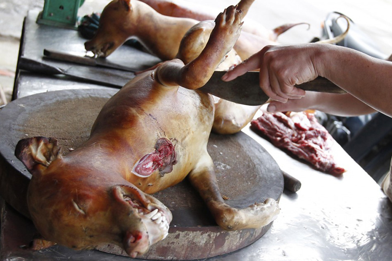 Manger-du-chien-Vietnamien