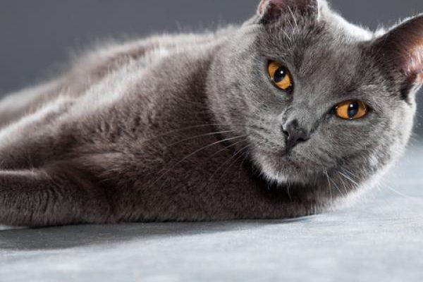 un chat sur la liste aux élections municipales france insoumise «rennes en commun» ?