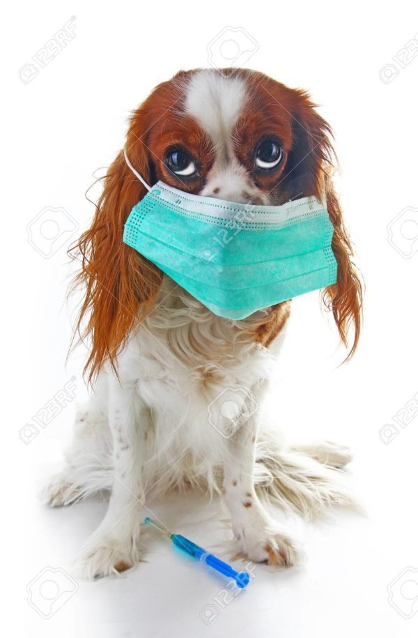 photo illustration. Animal pet doctor vet mask on puppy.