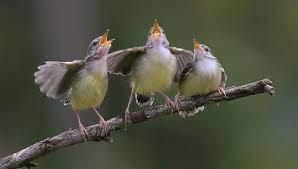 bon pour le moral et pour la santé:écouter la rivière et le chant des oiseaux.