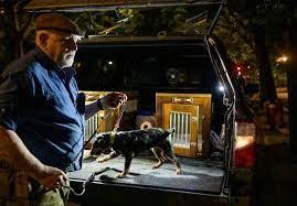 Des chasseurs avec des chieins traquent les rats dans les rues de new-york.