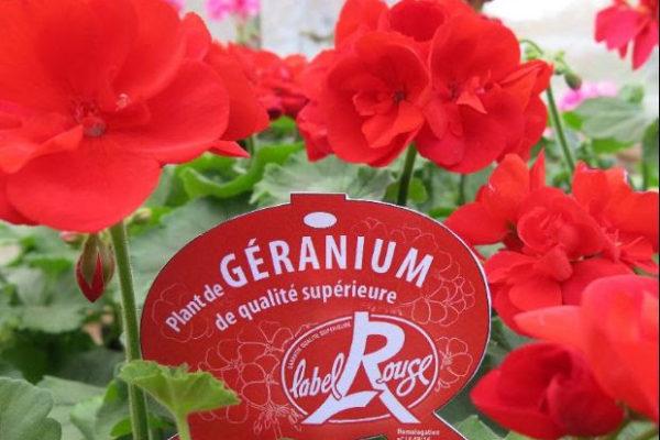 du géranium label rouge.