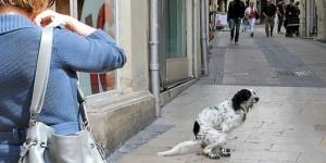 crottes de chien dans la rue