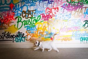 chats Bristol appartement Renk