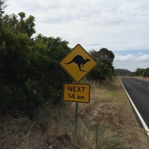 great ocean roade pancarte route kangourou