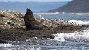 cape bridgewater animaux.
