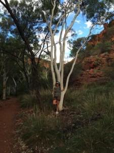 eucalyptus blanc Kings canion