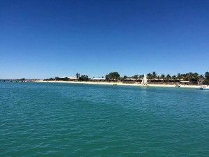 shark Bay. Monkey Mia
