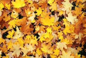 feuilles mortes.