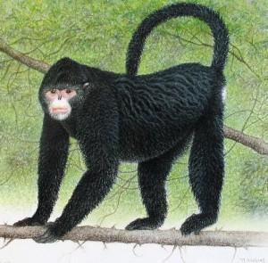 le singe qui éternue sous la pluie