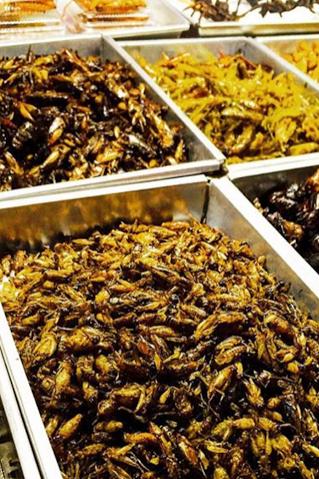 Bangkok insectes.