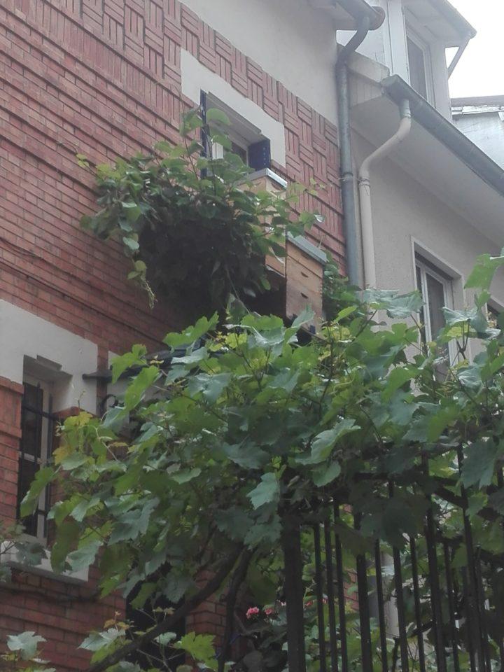 ruche. Villa Auguste Balnqui. 13 ème arrondissement. La Femme Qui Marche